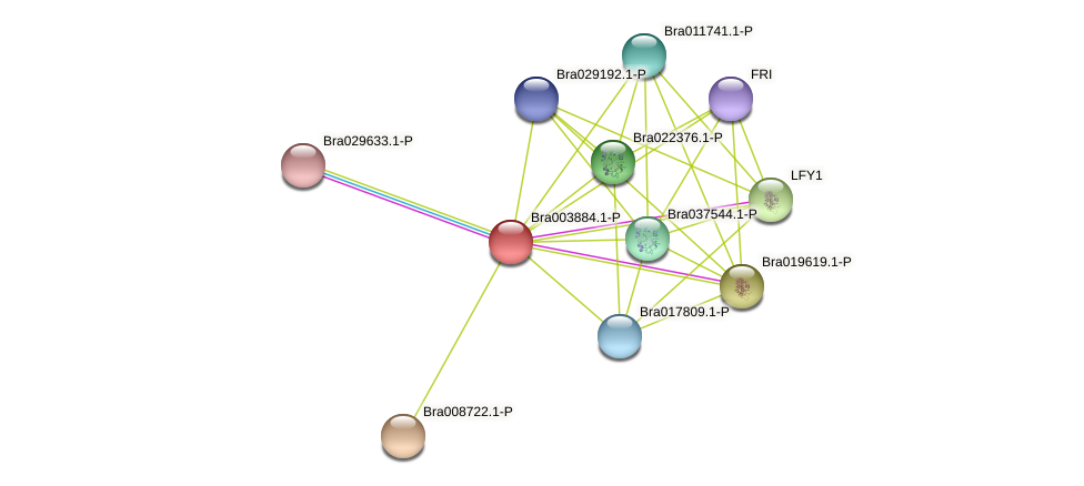 Bra003884 protein (Brassica rapa) - STRING interaction network