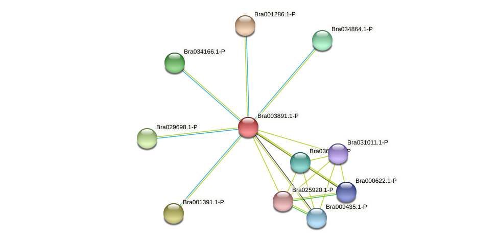 Bra003891 protein (Brassica rapa) - STRING interaction network