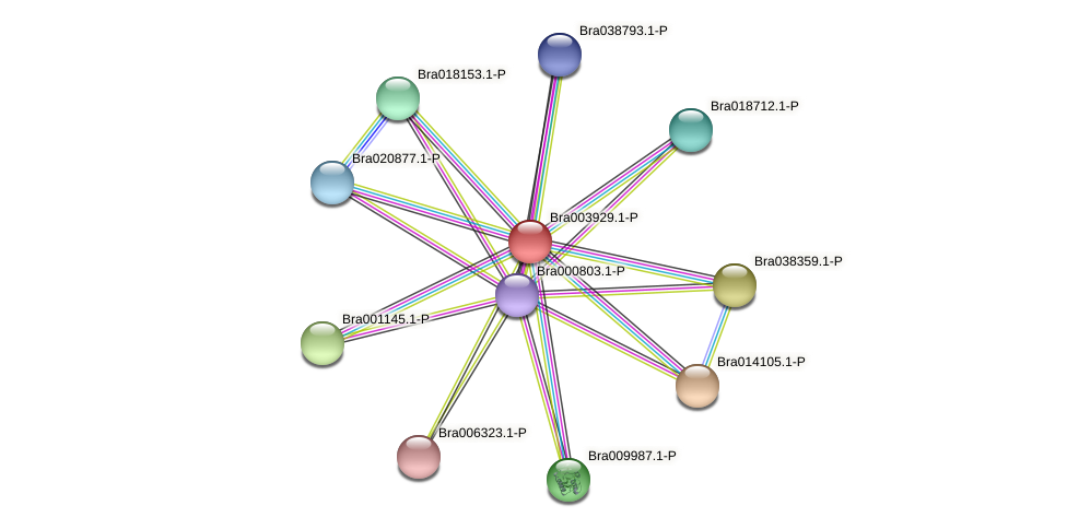 Bra003929 protein (Brassica rapa) - STRING interaction network