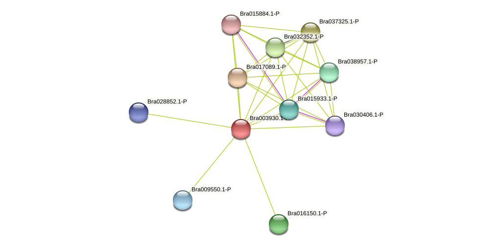 Bra003930 protein (Brassica rapa) - STRING interaction network