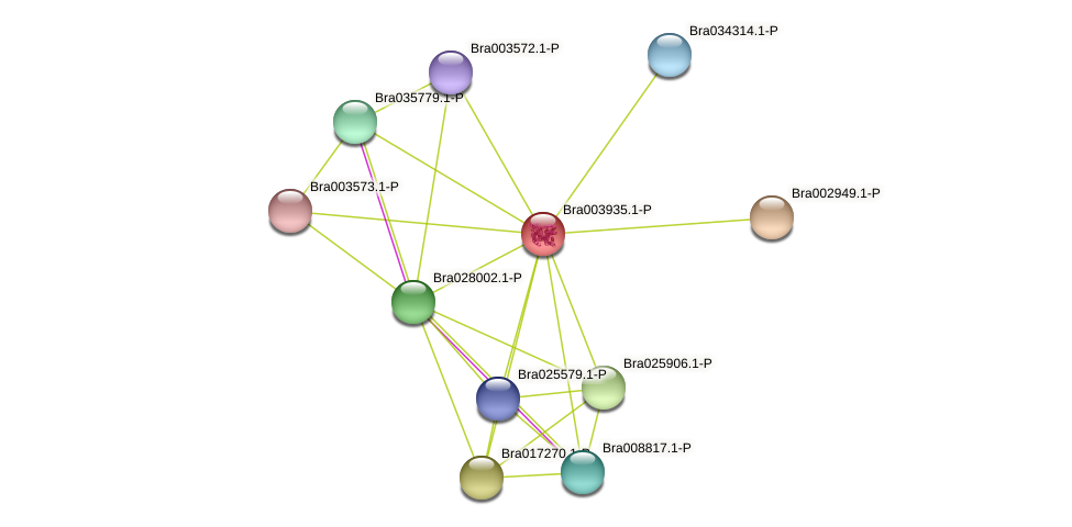 Bra003935 protein (Brassica rapa) - STRING interaction network