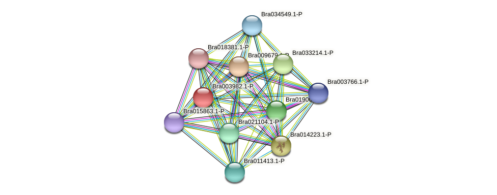 Bra003982 protein (Brassica rapa) - STRING interaction network