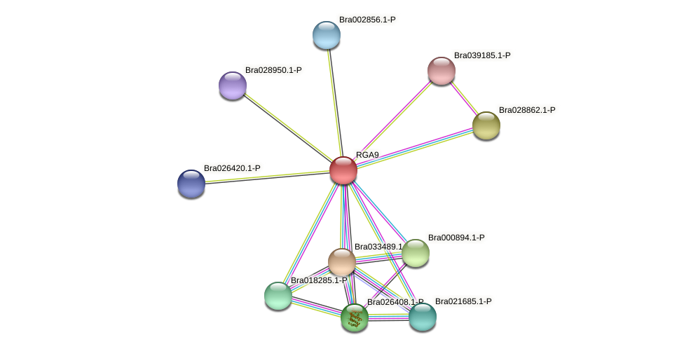 Bra003997 protein (Brassica rapa) - STRING interaction network