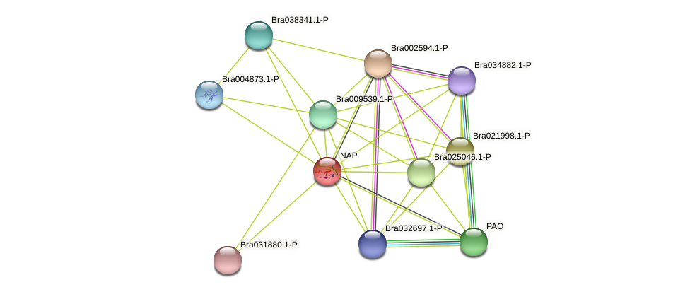 Bra003998 protein (Brassica rapa) - STRING interaction network