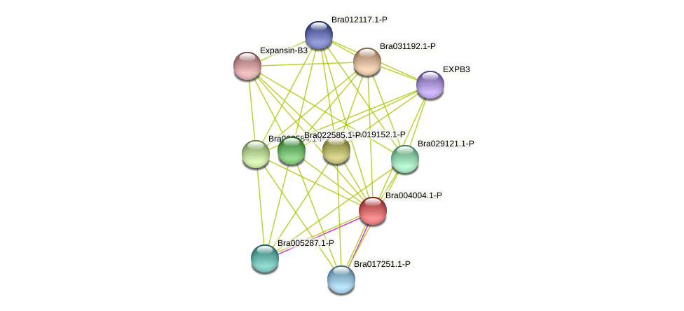 Bra004004 protein (Brassica rapa) - STRING interaction network