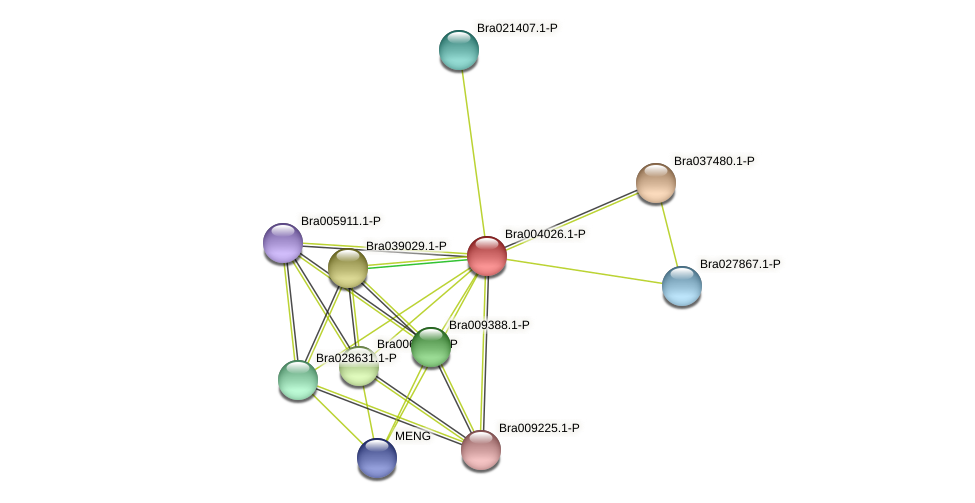 Bra004026 protein (Brassica rapa) - STRING interaction network