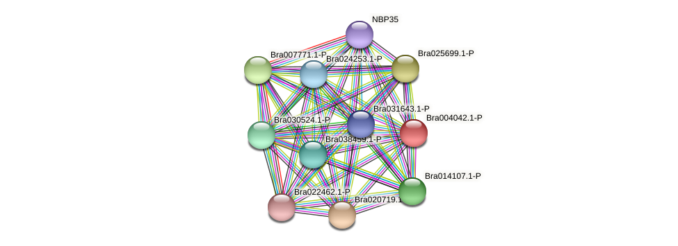 Bra004042 protein (Brassica rapa) - STRING interaction network