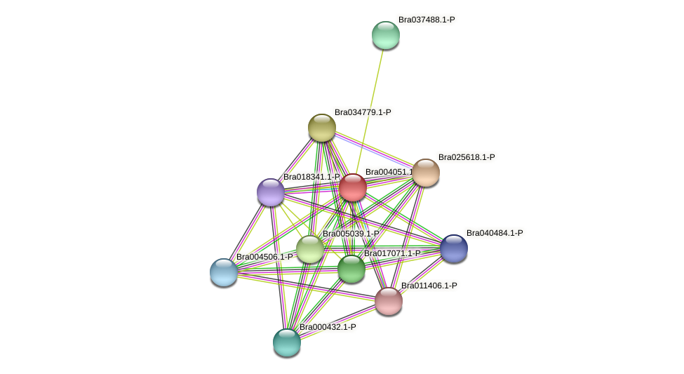 Bra004051 protein (Brassica rapa) - STRING interaction network