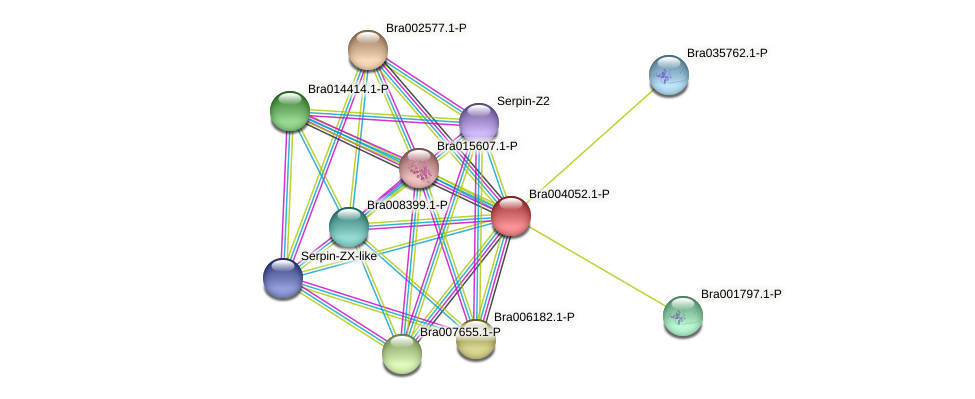 Bra004052 protein (Brassica rapa) - STRING interaction network