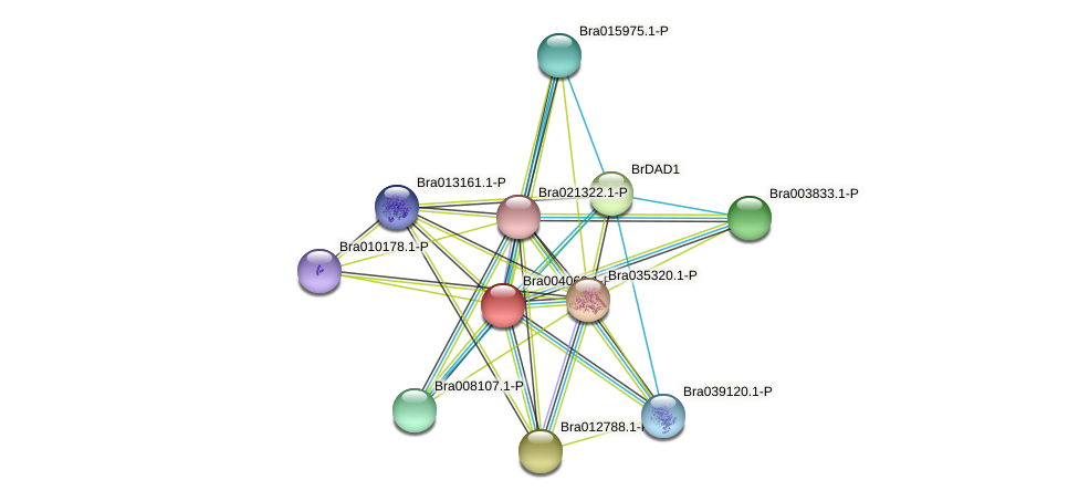 Bra004060 protein (Brassica rapa) - STRING interaction network