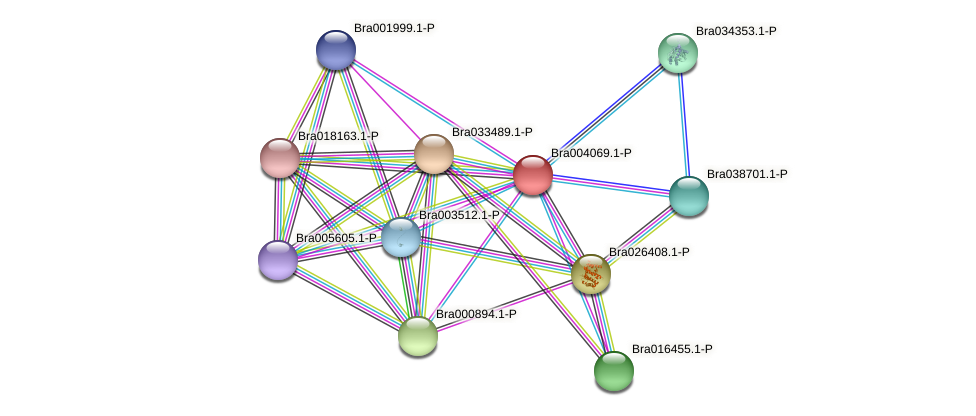Bra004069 protein (Brassica rapa) - STRING interaction network