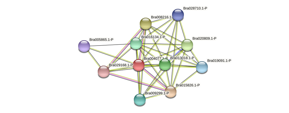 Bra004077 protein (Brassica rapa) - STRING interaction network