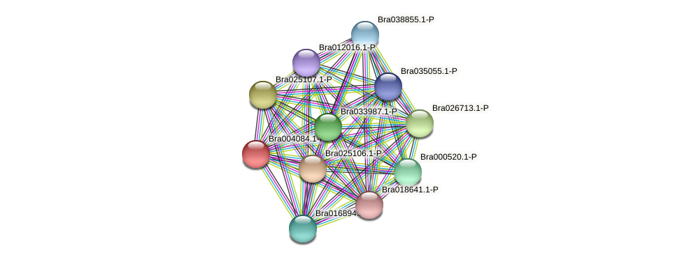 Bra004084 protein (Brassica rapa) - STRING interaction network