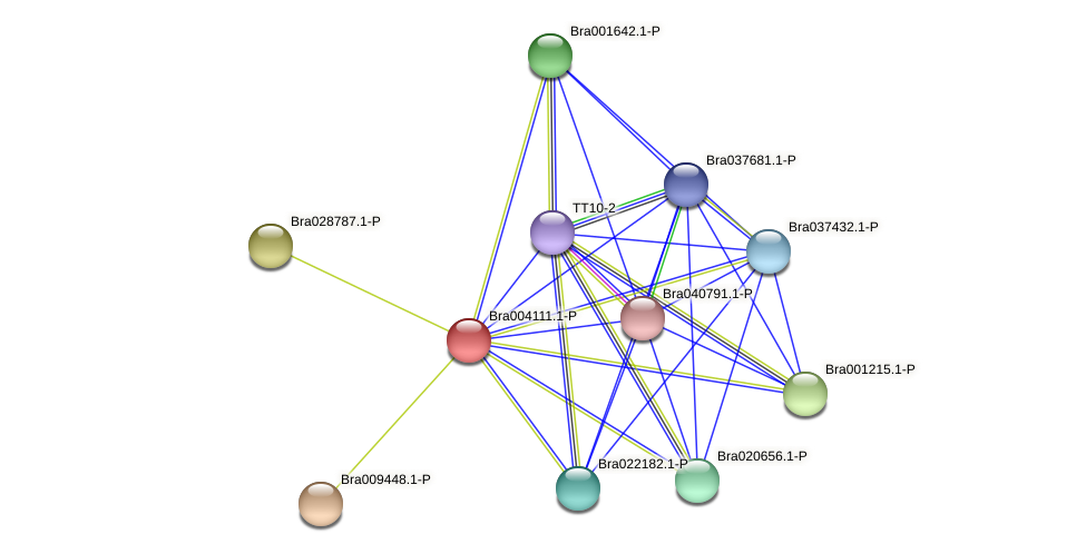 Bra004111 protein (Brassica rapa) - STRING interaction network