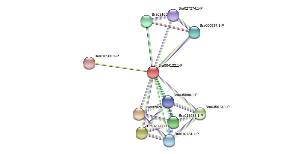 Bra004122 protein (Brassica rapa) - STRING interaction network