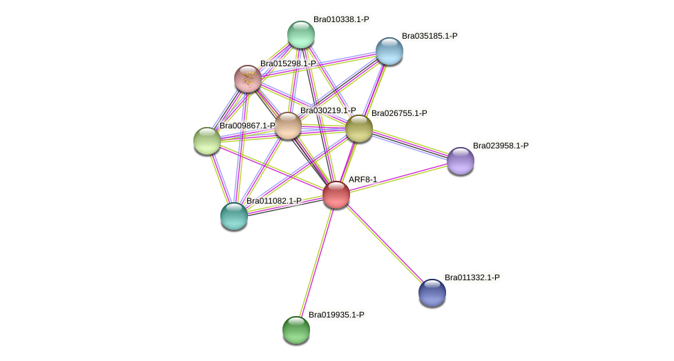 ARF8-1 protein (Brassica rapa) - STRING interaction network