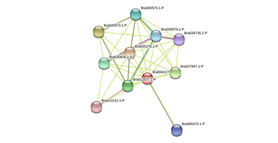 Bra004127 protein (Brassica rapa) - STRING interaction network