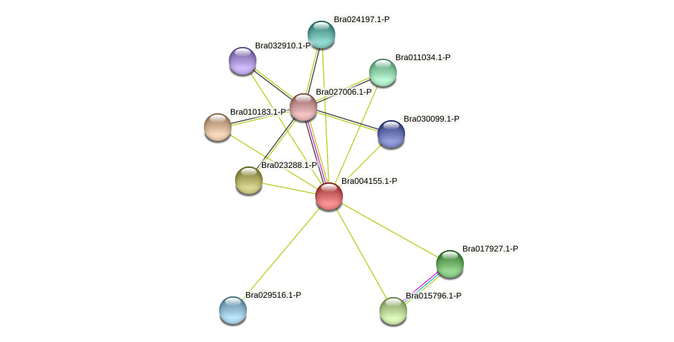 Bra004155 protein (Brassica rapa) - STRING interaction network