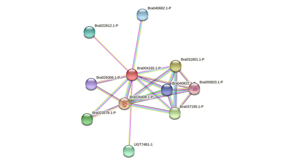 Bra004165 protein (Brassica rapa) - STRING interaction network