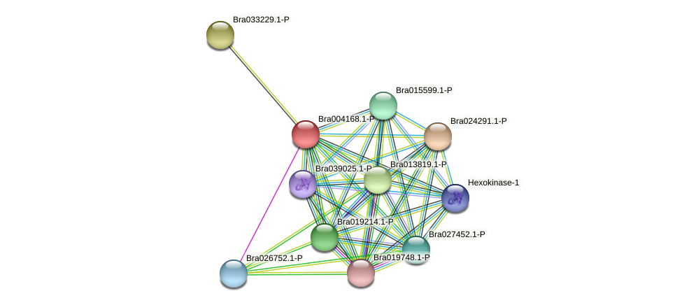 Bra004168 protein (Brassica rapa) - STRING interaction network
