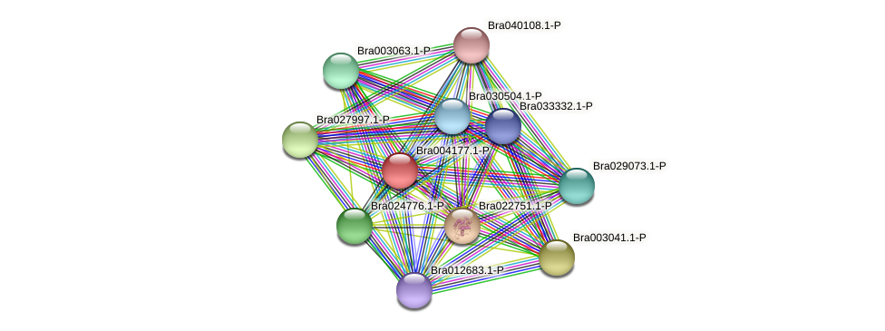 Bra004177 protein (Brassica rapa) - STRING interaction network