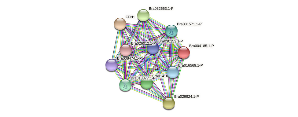 Bra004185 protein (Brassica rapa) - STRING interaction network