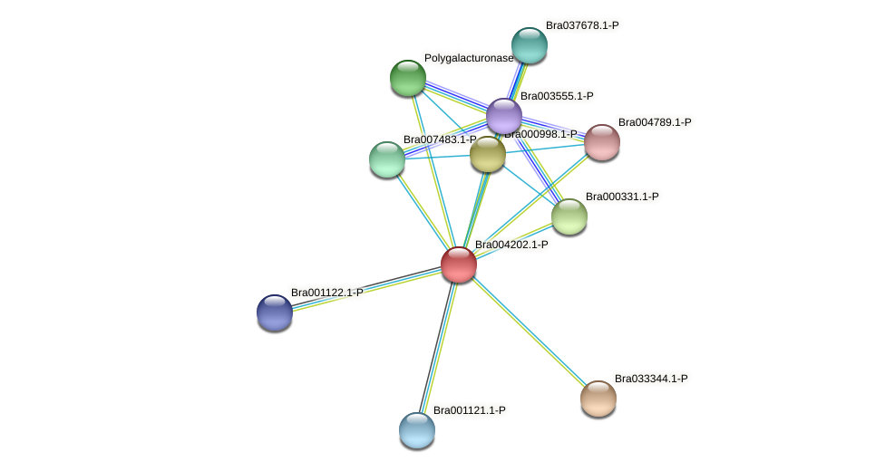 Bra004202 protein (Brassica rapa) - STRING interaction network