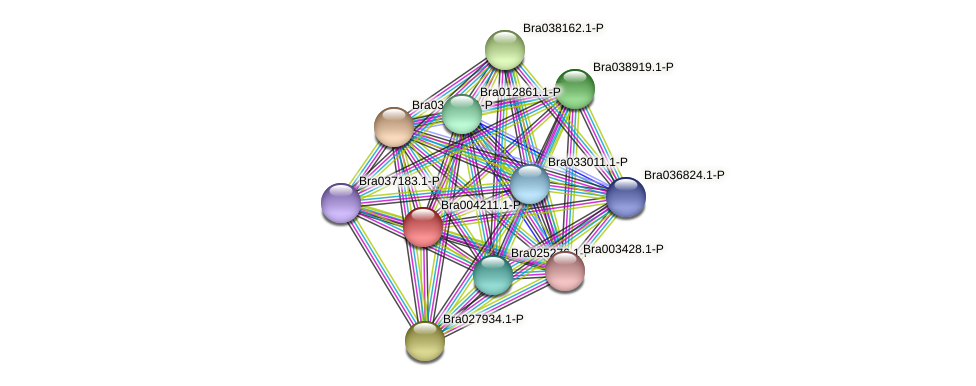 Bra004211 protein (Brassica rapa) - STRING interaction network
