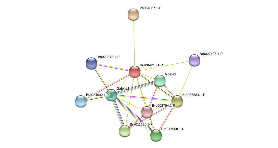 Bra004216 protein (Brassica rapa) - STRING interaction network