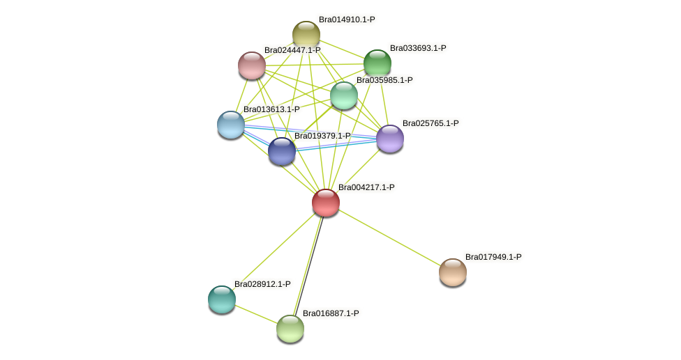 Bra004217 protein (Brassica rapa) - STRING interaction network