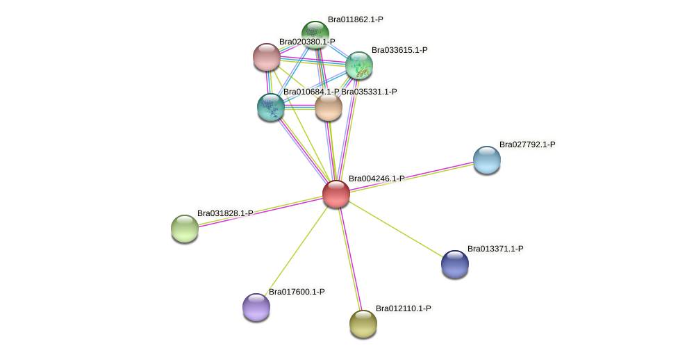 Bra004246 protein (Brassica rapa) - STRING interaction network
