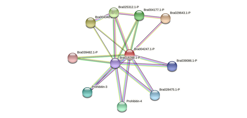 Bra004247 protein (Brassica rapa) - STRING interaction network
