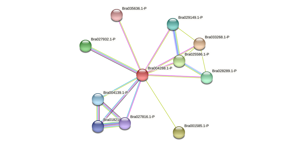 Bra004288 protein (Brassica rapa) - STRING interaction network