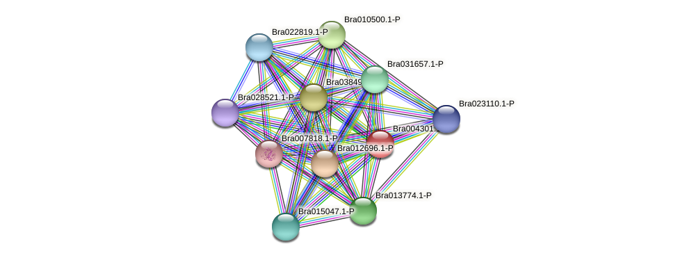 Bra004301 protein (Brassica rapa) - STRING interaction network
