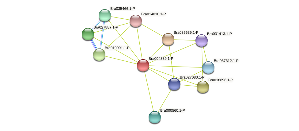 Bra004339 protein (Brassica rapa) - STRING interaction network
