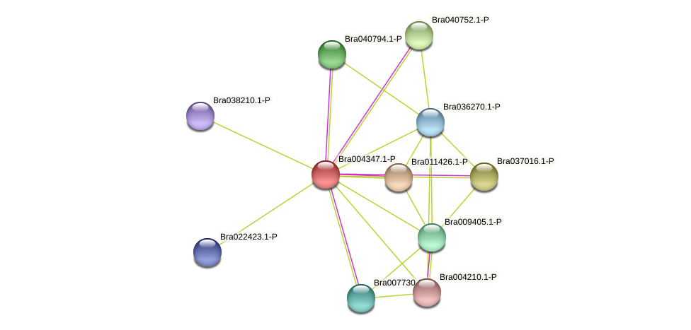 Bra004347 protein (Brassica rapa) - STRING interaction network