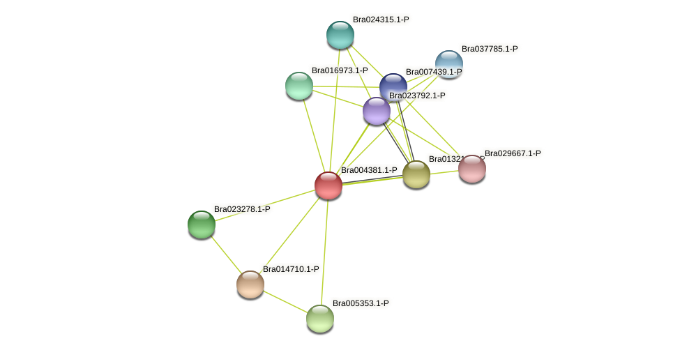 Bra004381 protein (Brassica rapa) - STRING interaction network