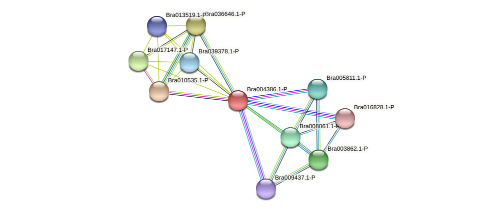 Bra004386 protein (Brassica rapa) - STRING interaction network