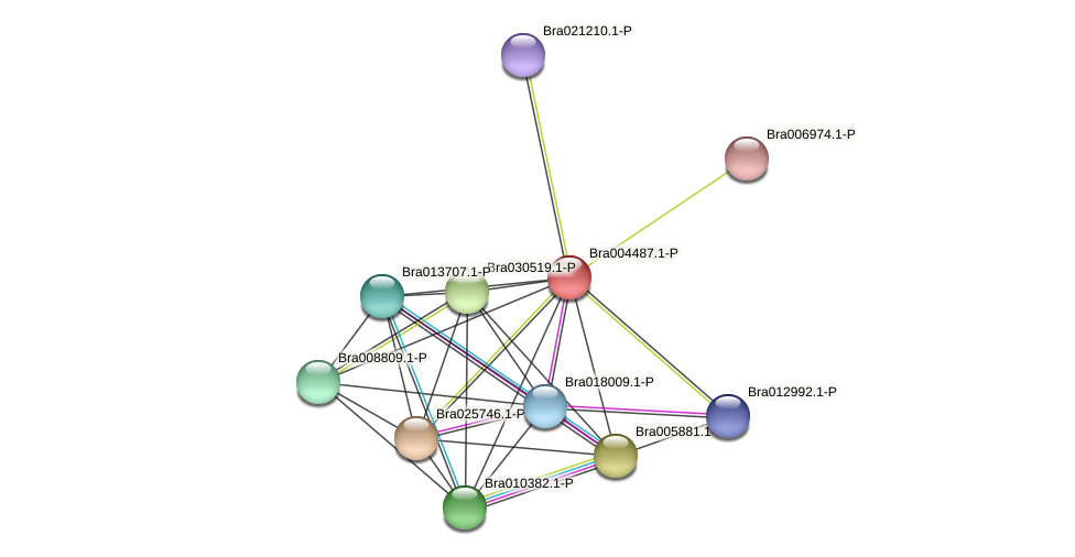Bra004487 protein (Brassica rapa) - STRING interaction network