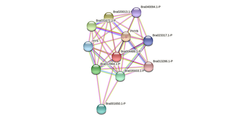 Bra004489 protein (Brassica rapa) - STRING interaction network