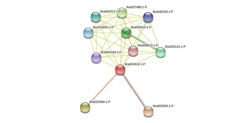 Bra004516 protein (Brassica rapa) - STRING interaction network