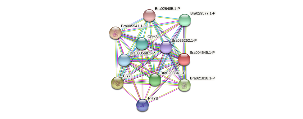 Bra004545 protein (Brassica rapa) - STRING interaction network