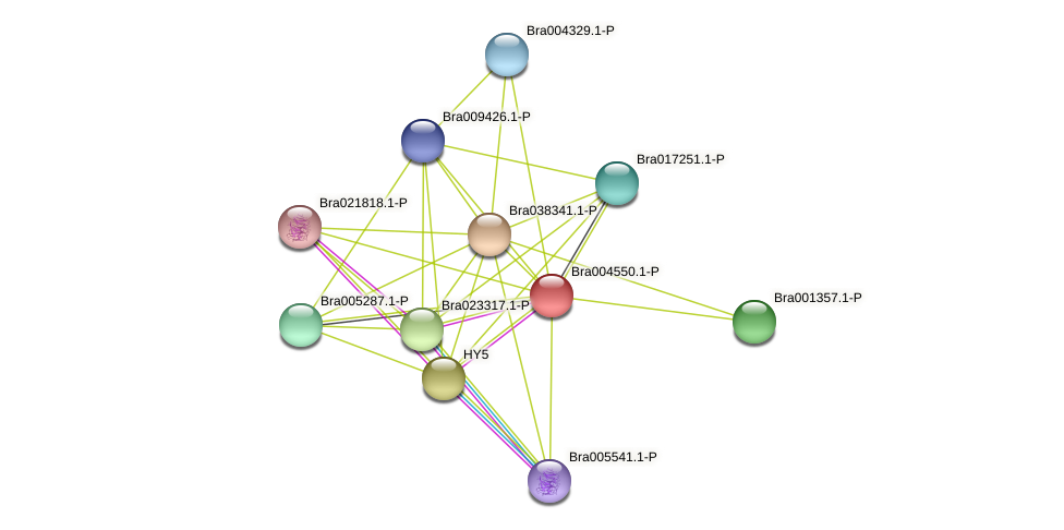 Bra004550 protein (Brassica rapa) - STRING interaction network