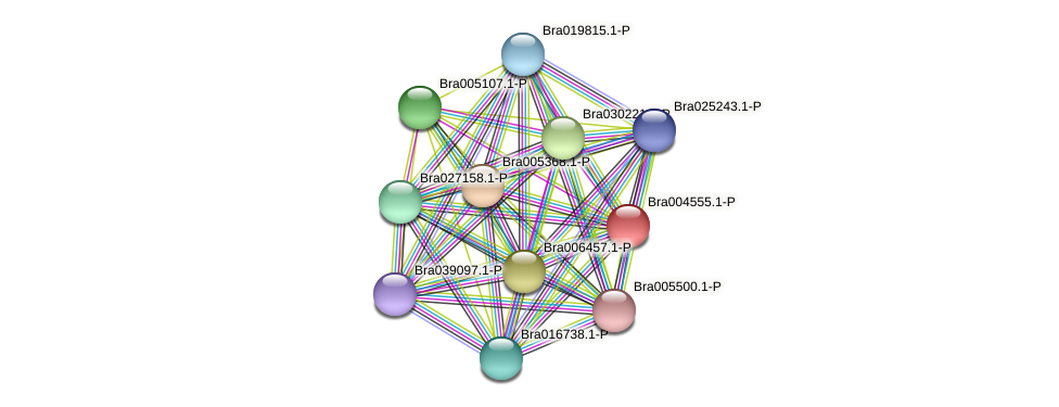 Bra004555 protein (Brassica rapa) - STRING interaction network