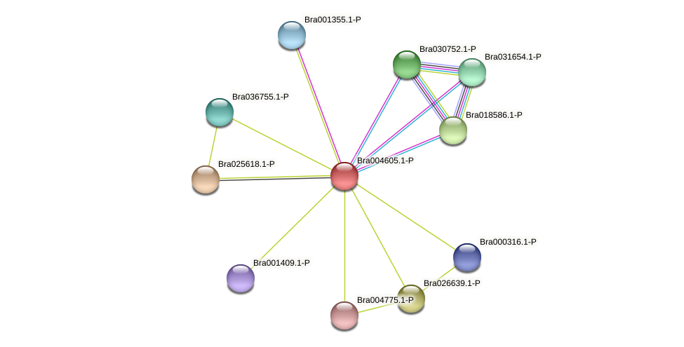 Bra004605 protein (Brassica rapa) - STRING interaction network