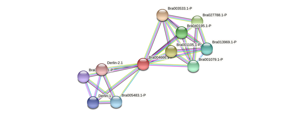 Bra004666 protein (Brassica rapa) - STRING interaction network