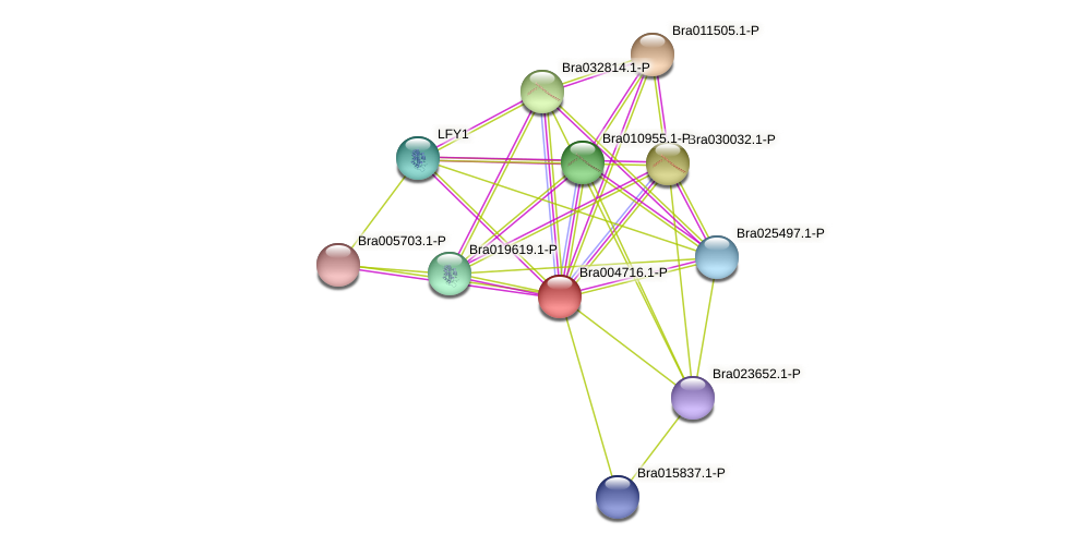 Bra004716 protein (Brassica rapa) - STRING interaction network
