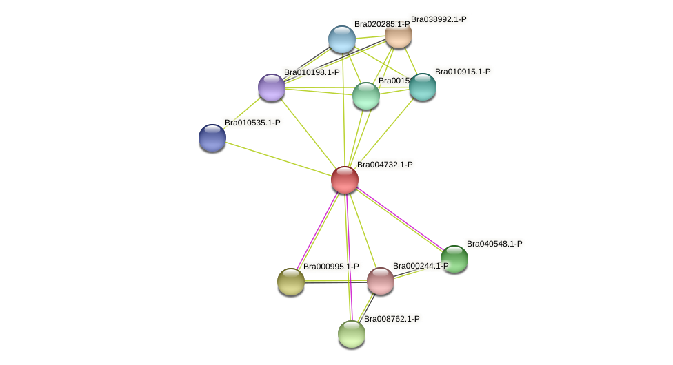 Bra004732 protein (Brassica rapa) - STRING interaction network