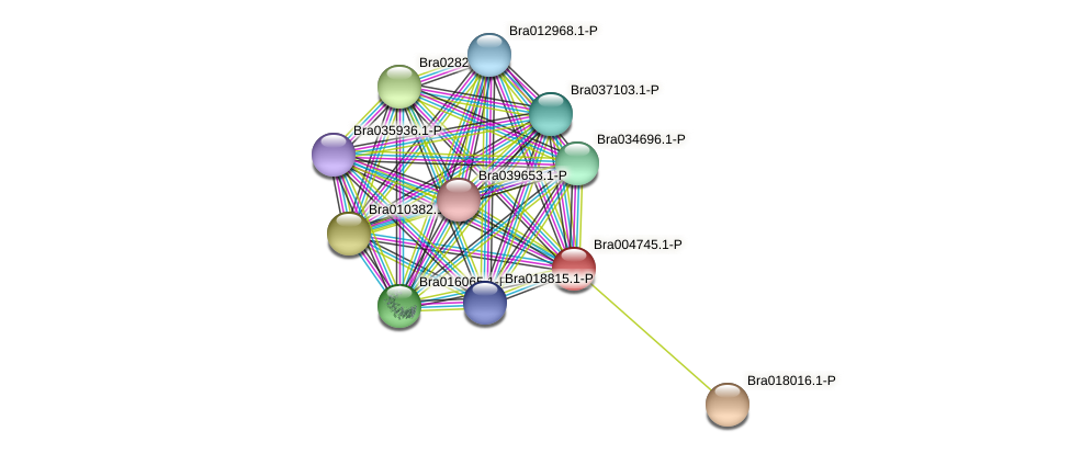Bra004745 protein (Brassica rapa) - STRING interaction network