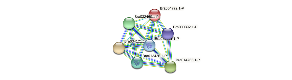 Bra004772 protein (Brassica rapa) - STRING interaction network